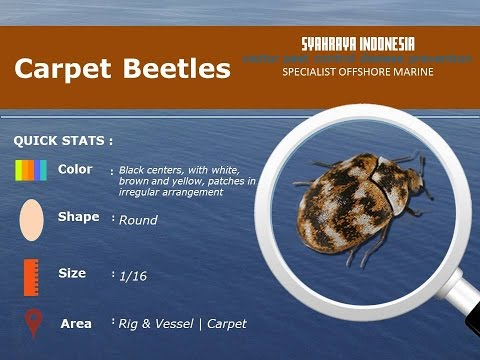 Insect Guide | Carpet Beetles Prevention Control