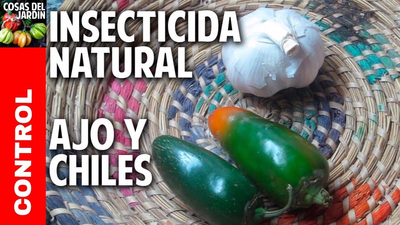 Remedio casero para acabar con las plagas organico - Plantas para ahuyentar insectos ...