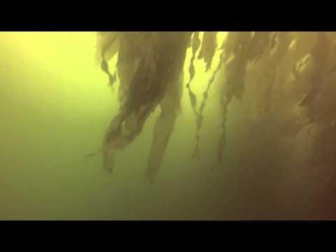 Diving Pucusana Peru