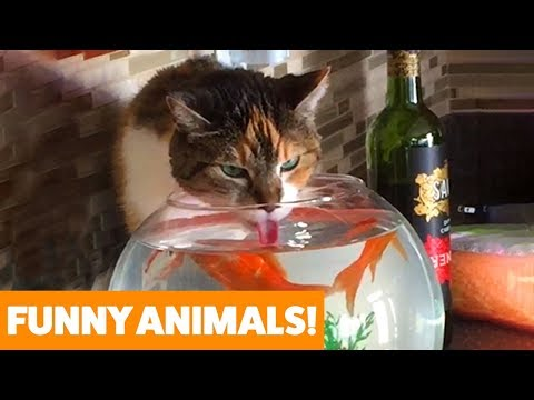 Funniest Pets & Animals of the Week | Funny Pet Videos Funny Animal Videos