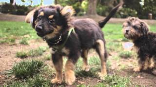 2014 Melbourne Dog Lovers Show Television Advert