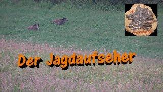 Jagd im Sommer auf Schwarzwild / Wild boar