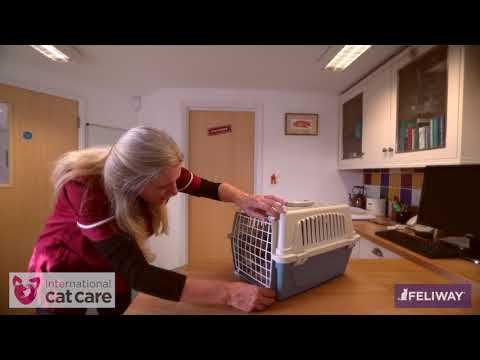 Greeting and assessing a cat in its carrier
