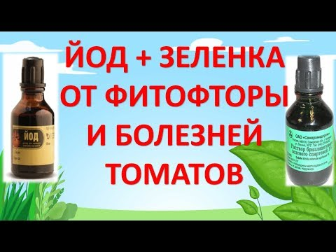 ЙОД и ЗЕЛЕНКА ОТ ФИТОФТОРЫ И БОЛЕЗНЕЙ ТОМАТОВ. Средство от фитофторы. Чем обработать томаты.