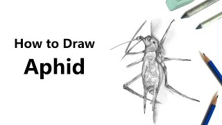 How to Draw a Aphid with Pencils [Time Lapse]