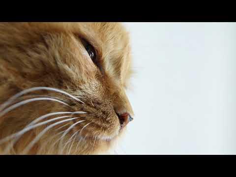 Почему у кошки горячие лапы
