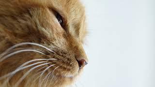 Какой должен быть нос у здорового кота, здоровой кошки?