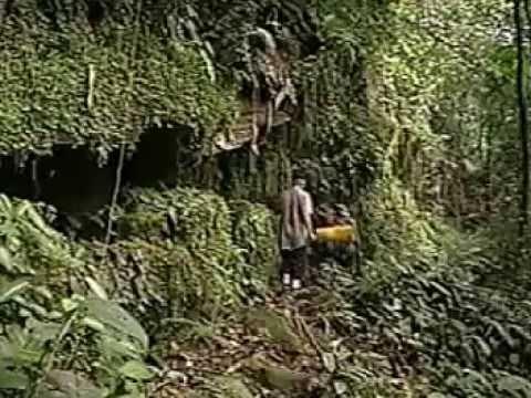 Guyana Jungle