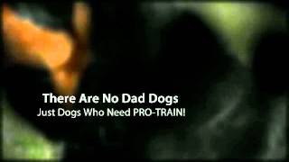 Dog Training Del Mar, Ca Dog Obedience Training 92014