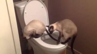 Котенок писяет в туалет. Мама кошка помогает