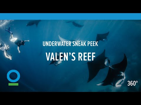 """Valen's Reef"" Underwater Sneak Peek in 360 video 