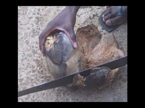 how to husk and cut open a coconut