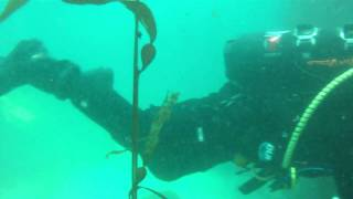 2009-05-17 Coral Street - Dive 2, class.mp4