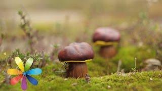 ТОП-5 блюд из грибов - Лучшие советы «Все буде добре» - Все будет хорошо