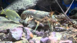 Curacao Sea Aquarium Virtual Tour