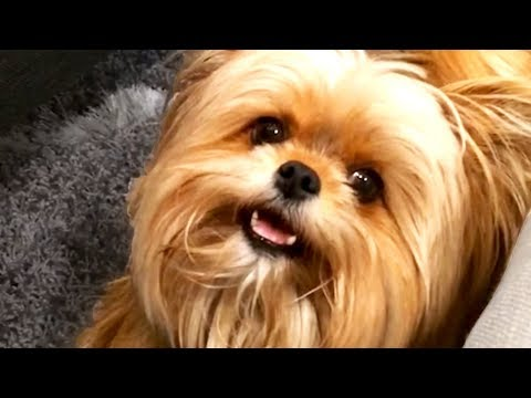 FUNNY AND CUTE ANIMAL VIDEOS TO START 2020!