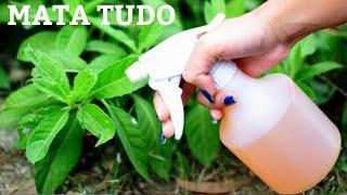Nunca mais tenha praga nas plantas ( pulgão,mosca,nilhas)
