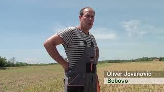 Efekti EkoFreez u ratarstvu i povrtarstvu, Bobovo 2018. Srbija - Ratarstvo- Stocarstvo