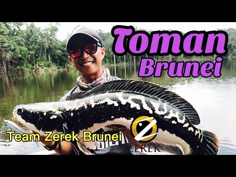 Team Zerek Brunei Toman Fishing
