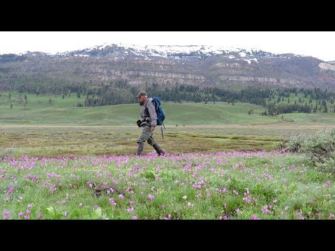 Slough Creek May 26, 2018 - Yellowstone