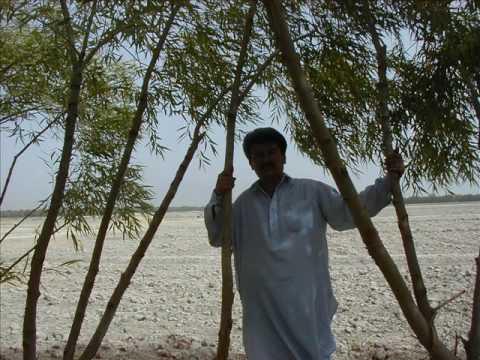 janam dekh lo.Shah Rukh Khan