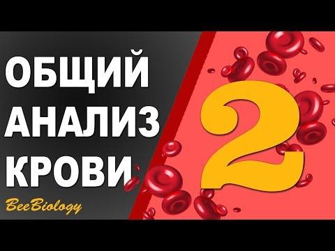 Общий Анализ Крови • НОРМА • показателей  /Гемоглобин / Эритоциты / СОЭ / Лейкоциты / Тромбоциты