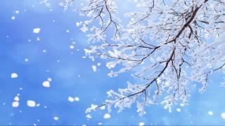 Mai Hoa Tuyết 梅花雪