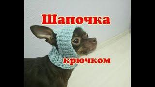 Шапочка для собаки крючком,  DIY suit for dogs & cats