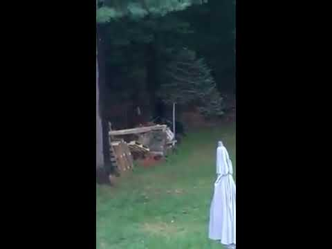 Video shows three bear cubs climbing tree in Easthampton backyard