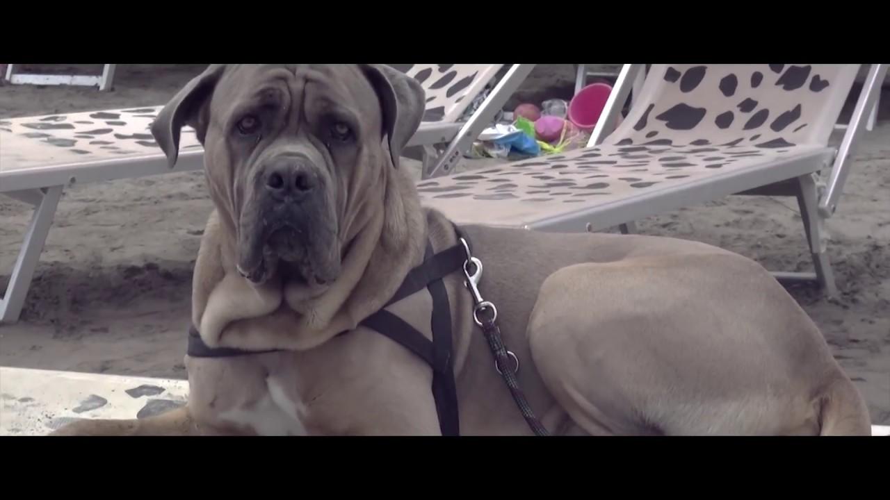 Bagni capo mele spiaggia attrezzata per cani youtube