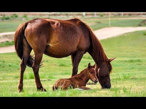 Как можно назвать лошадку