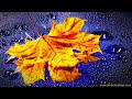 GENTLE RAIN   Rain Nature Sounds For Relaxation, Sleep (10 Hours)