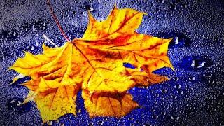 GENTLE RAIN | Rain Nature Sounds For Relaxation, Sleep (10 Hours)