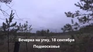 Охота на уток на перелетах видео