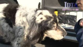 JDTA保護犬支援プロジェクト 活動報告(2011/4/29)