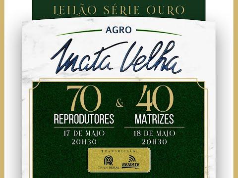 Lote 01   C1835 FIV J  Mata Velha   MATA C1835 Copy