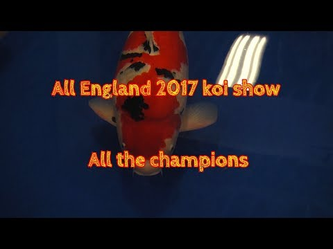 All England 2017 koi show All the champions