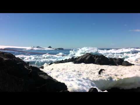 pinguini in movimento, base esperanza (Antartide)