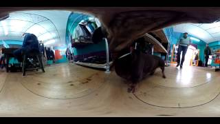 360 video Explore the world a dog sees.