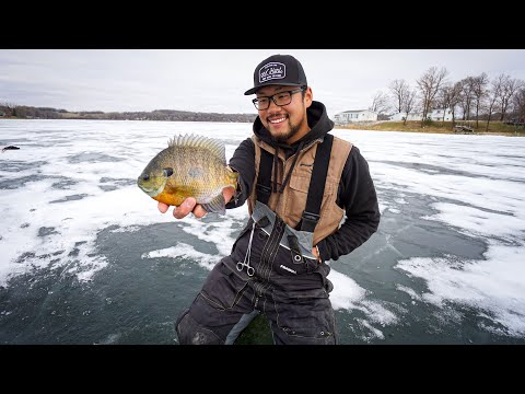 Catching GIANT Early Ice Bluegills! (MINNESOTA ICE FISHING)