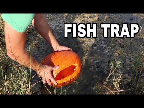 PUMPKIN FISH TRAP Catches JAWS DINNER