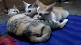 KUCING TAKUT SUARA Mp3