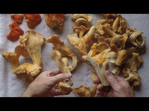 Cleaning and Cooking Chaneterelle Mushrooms