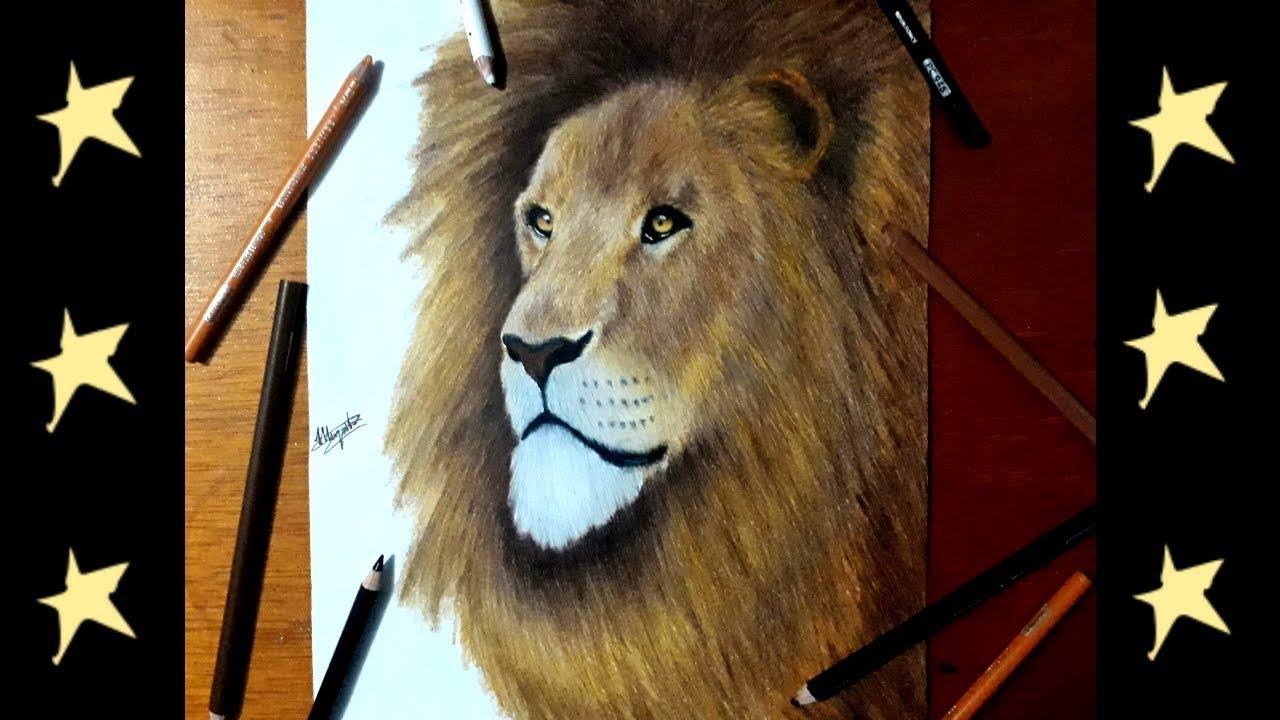 Dibujando leon realista a colores - YouTube