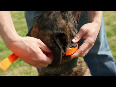 Ep.3 - K9 Dog Training with Mike Ritland: E-collar fitting and set up
