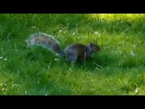 The Squirrel King of Kew Gardens