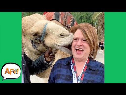 Nothing Like a CAMEL KISS to RUIN Your DAY! 😂 | Best Funny Animal and Nature Fails | AFV 2021