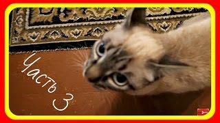 В гостях у канала ХОМКИ. Все животные канала ХОМКИ! Кошки-мышки! Часть 3