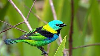 أسماء الطيور بالعربية والإنجليزية والفرنسية  Names of birds in Arabic, English and French