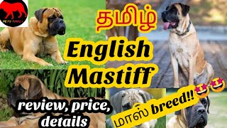 English mastiff in tamil/petstamila/Tamil/english mastiff dog in tamil/dogs/Mastiff dog/foreign dogs